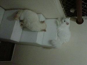 gatos acesso a sacada