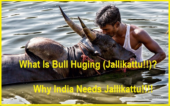 why india needs jallikattu