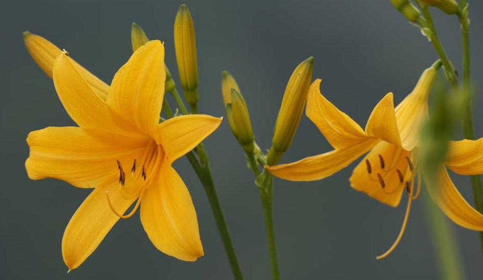 De Diferentes Tipos Flores Sus Y Nombres