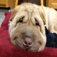 15 Imagens de animais sorrindo que fará você rir muito!