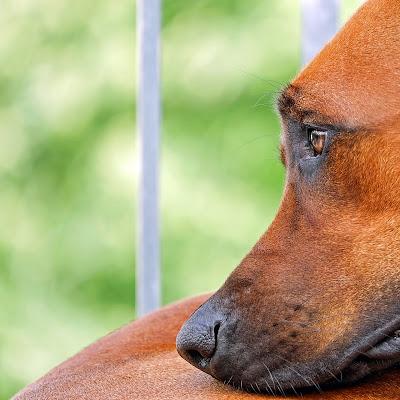 ölüm öncesi köpekler