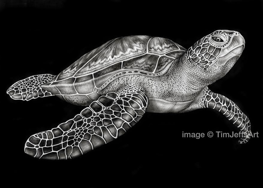 15-Green-Sea-Turtle-Tim-Jeffs-All-Creatures-Great-and-Small-Ink-Drawings-www-designstack-co