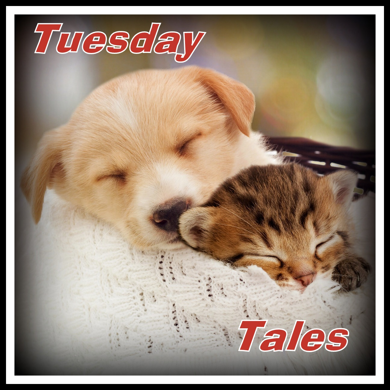 Tuesday Tails