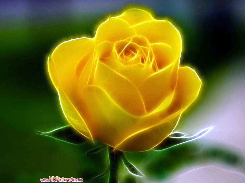 Free Download Yellow Rose Wallpapers