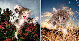 Rescue Kittens Caught In Mid-Pounce (10 Pics)