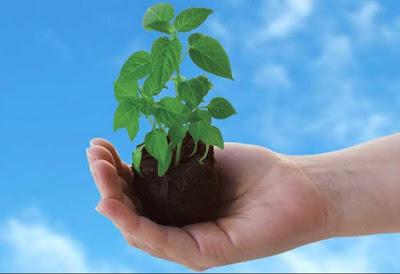 Pengertian dan Manfaat Reboisasi Serta Penghijauan