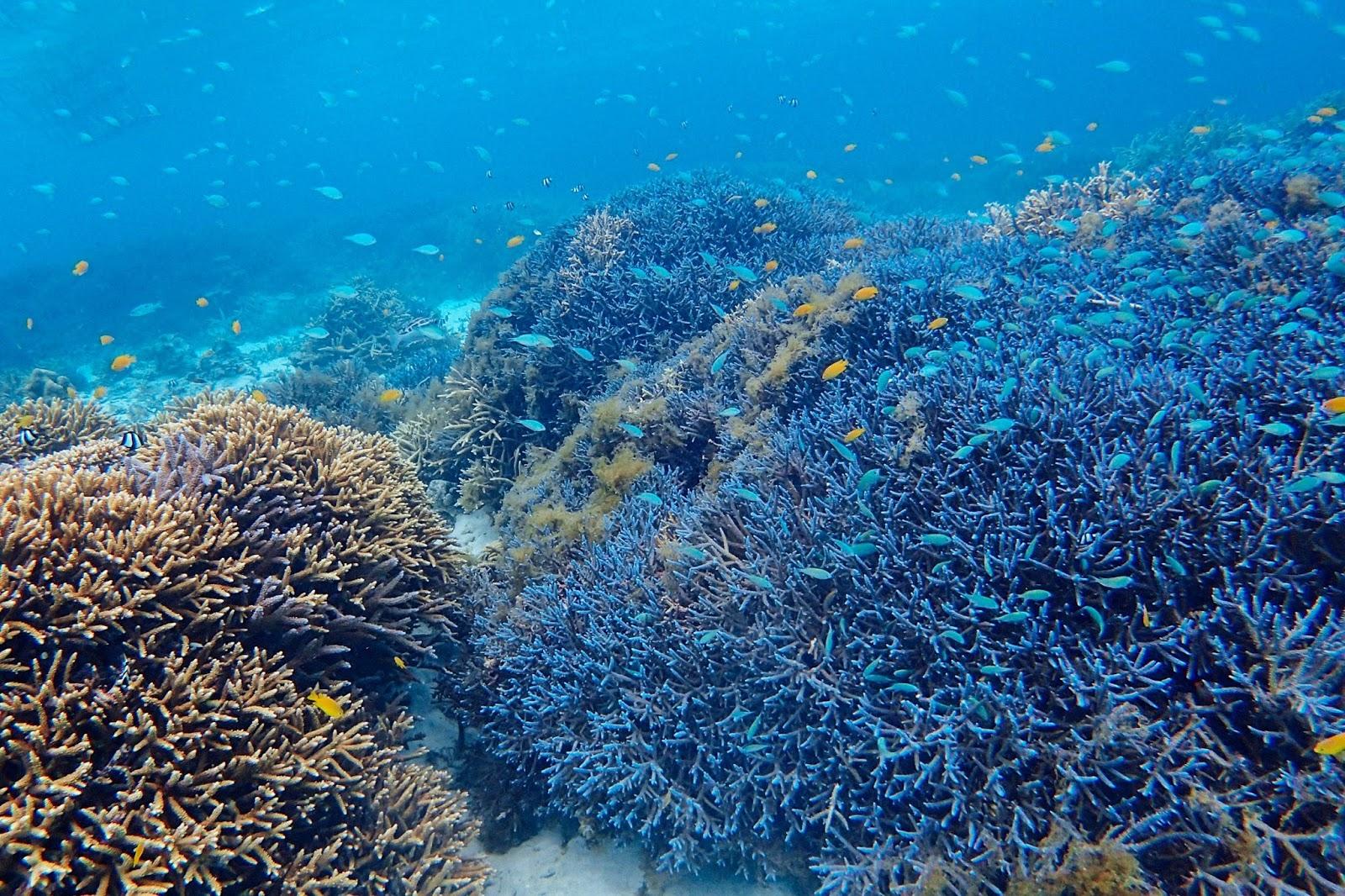 沖繩-沖繩潛水-沖繩浮潛-八重山群島-推薦-潛點-Okinawa-scuba-diving-snorkeling