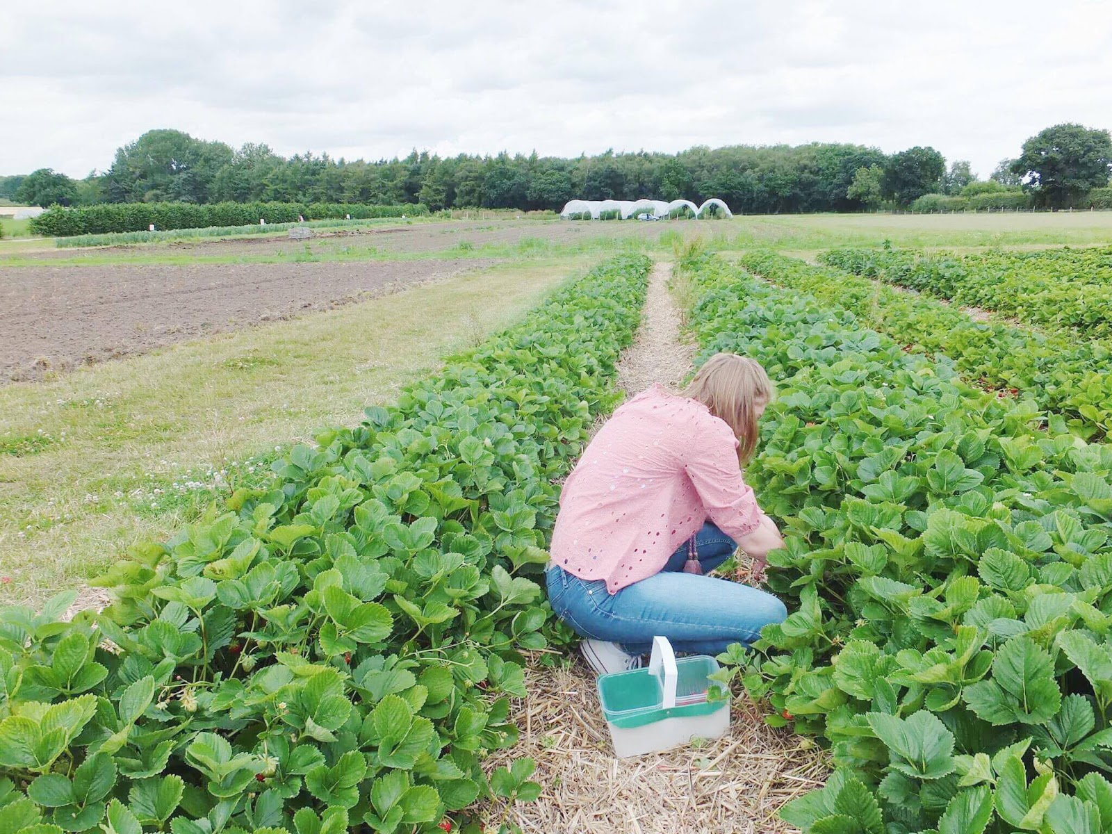 Bethany-Alice-Webb-Picking-Strawberries