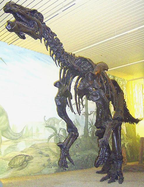 iguanodon schelet