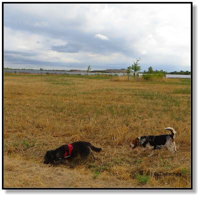 Emma und Lotte - eine Hundefreundschaft