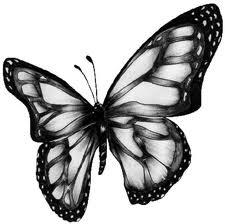 Dibujo de una mariposa hermosa