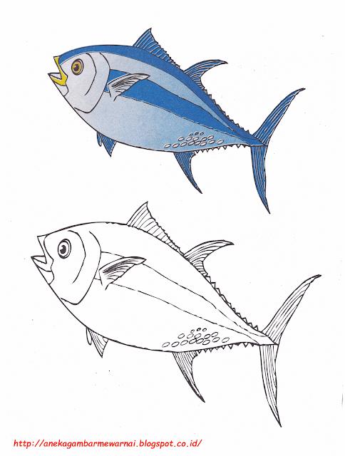 Gambar Mewarnai Ikan Tuna Untuk Anak PAUD dan TK