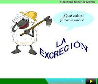 http://cplosangeles.juntaextremadura.net/web/edilim/curso_4/cmedio/la_nutricion/la_excrecion/la_excrecion.html