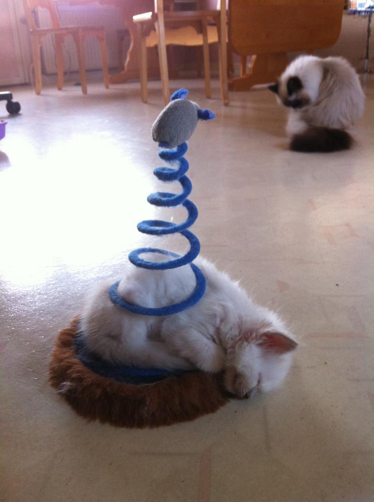 Funny Cats Part 13 43 Pics Amazing Creatures