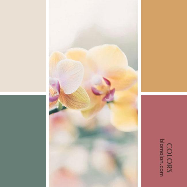 variedad_en_color_combinacion_25