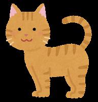 猫の模様のイラスト(茶トラ)