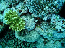 http://mightyeco.blogspot.com/2014/05/coral-reefs-coral-reefs-protect-people-coral-reefs-useful-coral-reefs.html