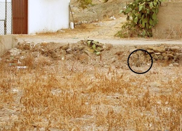 Find out the hidden cat in this picture Solution