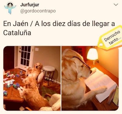 Perros en Jaén, a los diez días de llegar a Cataluña