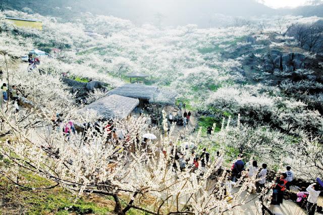 Du lich Han Quoc va nhung le hoi hoa day mau sac