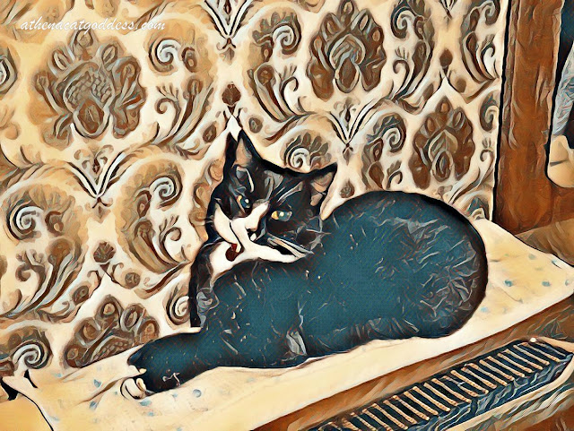 Caturday Art: Suzy