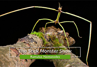 The Stick Monster Show