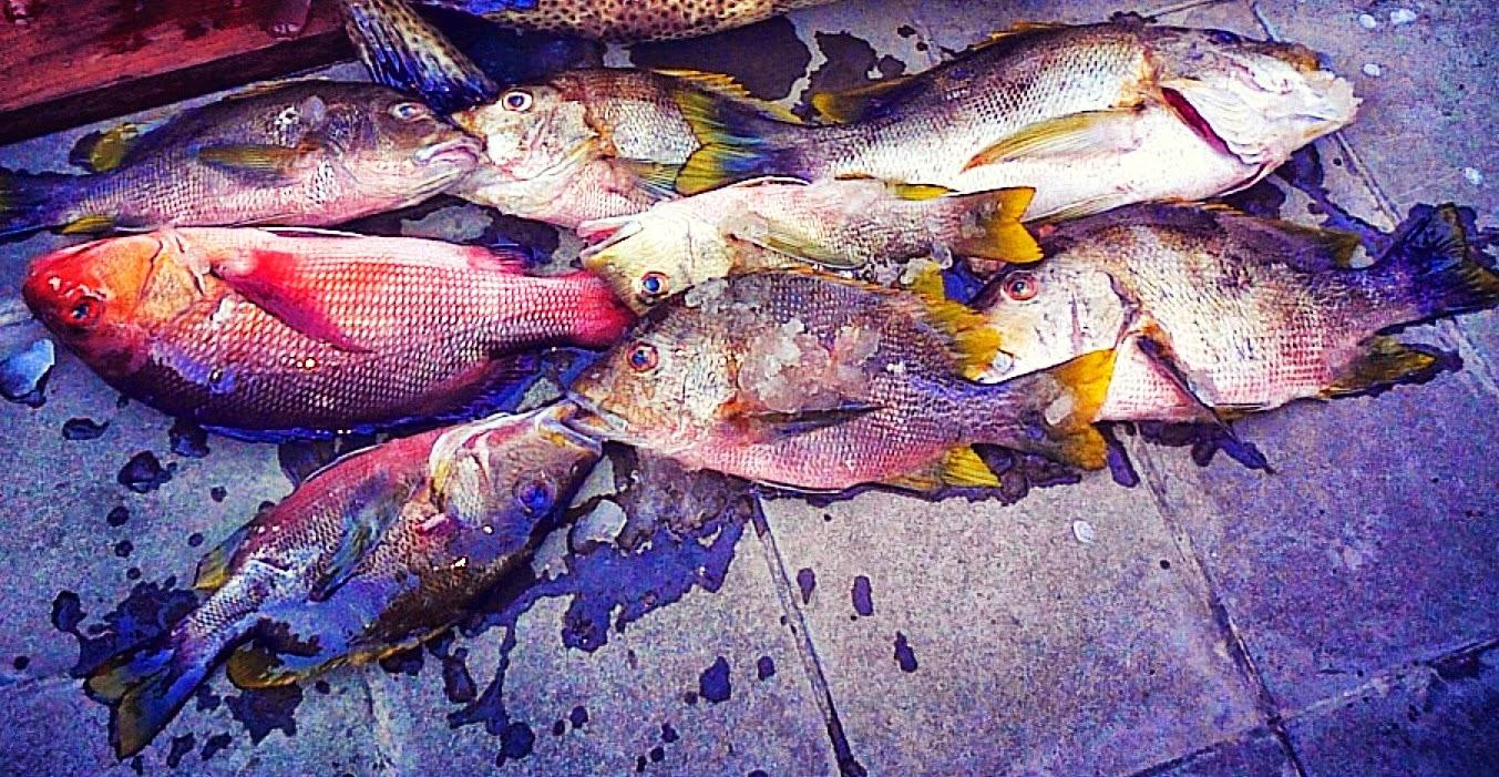 spearfishing Bali