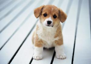 Die richtige Hunderasse wählen
