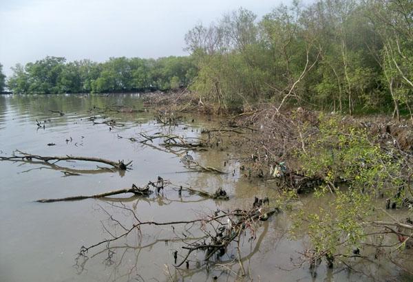 Hutan Mangrove di kawasan balikpapan