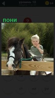 в загоне стоит пони и на верху сидит ребенок