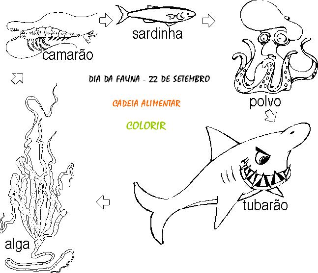 Dia Da Fauna Desenhos E Atividades Para Colorir Imprimir Vi