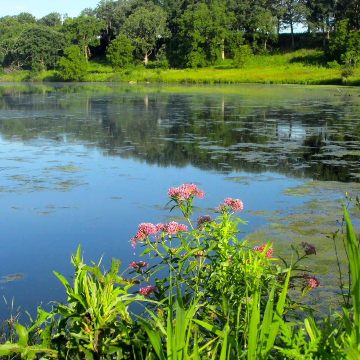 Hookup New Baldwin Park: Travel With Whippets: Prophetstown State Park --- West