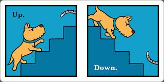 cão descendo escada
