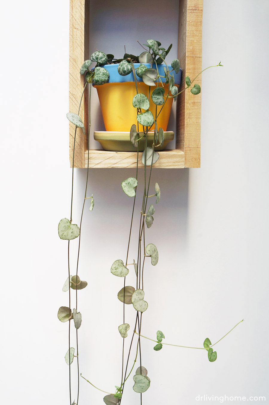 Diy jard n vertical mini en 4 pasos blog decoraci n con for Jardin vertical pequeno
