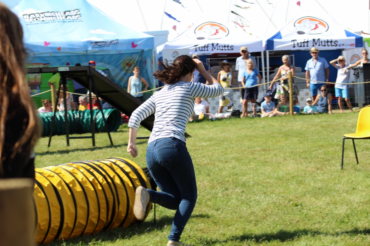 Dog Agility at Countryfile Live