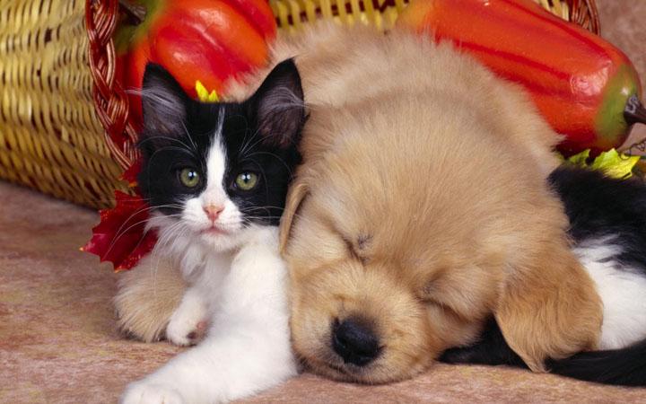 köpek ve kedi resimleri