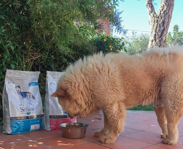 schesir qualità alimentare per cani e ganni