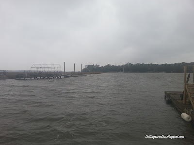 foggy marsh view