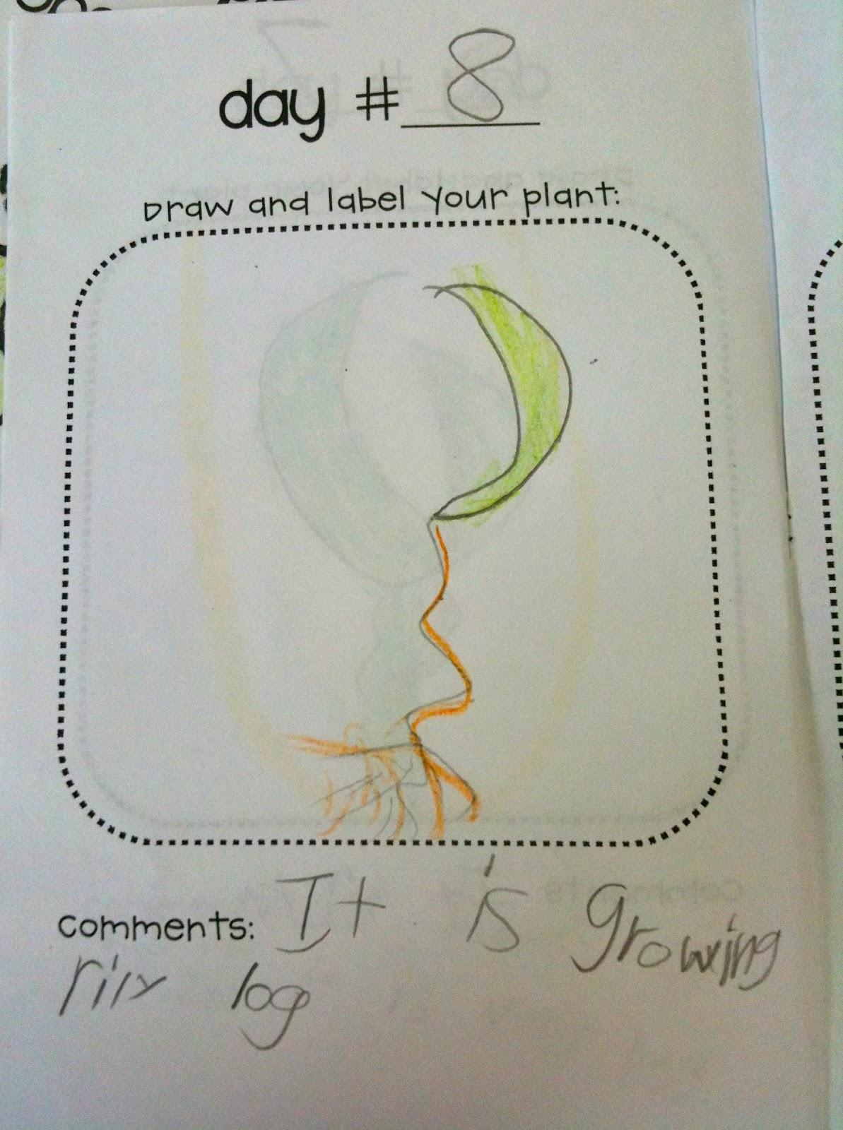 Kindergarten Superkids More Plants