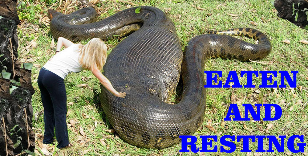 12 Deadliest Amazon Rainforest Animals - Kingreads