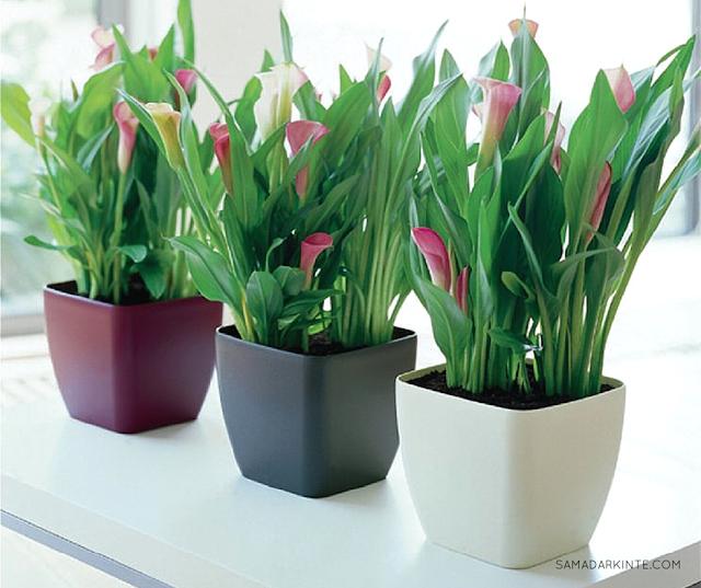samadar-kinte-Saiba-como-as-plantas-podem-deixar-seu-dia-mais-produtivo