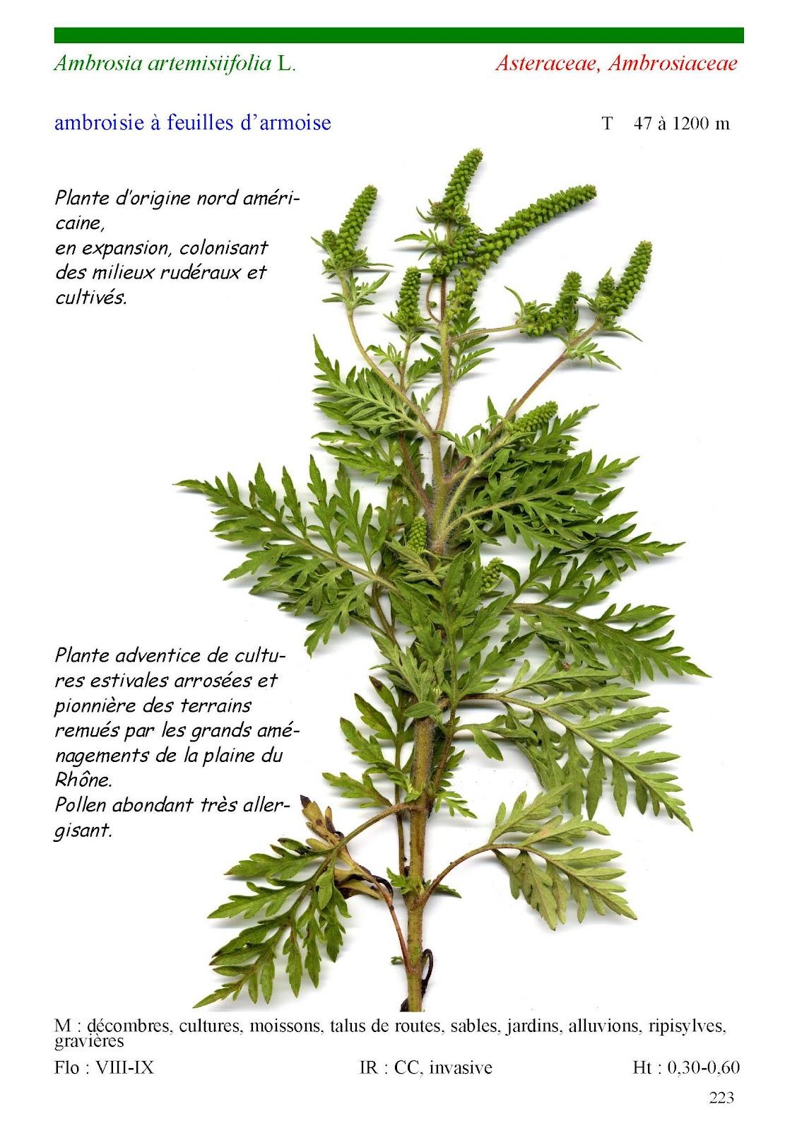 A la découverte de la Provence, Herbier de la Drôme Provençale: Herbier Planches 2