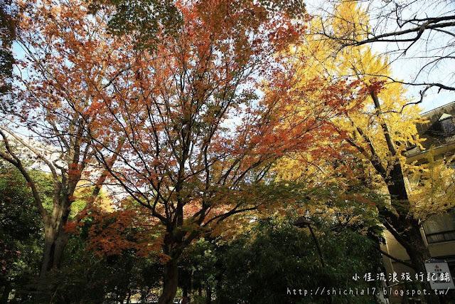 東京秋天賞楓~賞銀杏的好去處!