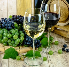 reportages sur le vin