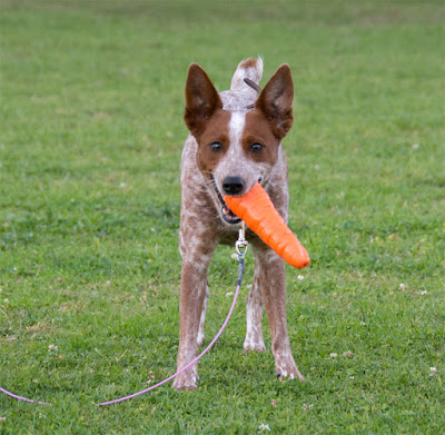 Carrot-shaped durable chew toy