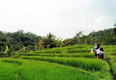 Wanita-wanita Perkasa Dari Pedesaan