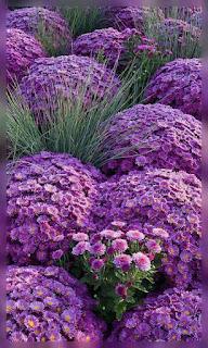 Flores en racimo moradas fondos wallpaper para teléfono móvil resolución 480x800