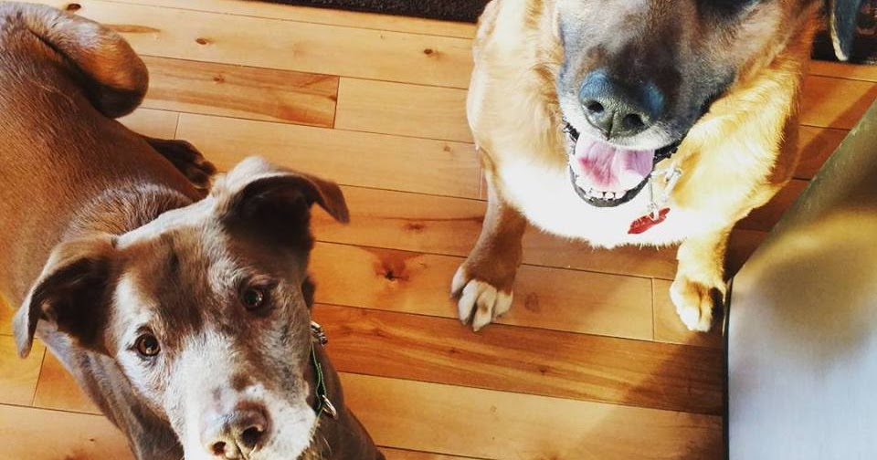 Why My Dogs Have Email Addresses and Yours Should Too