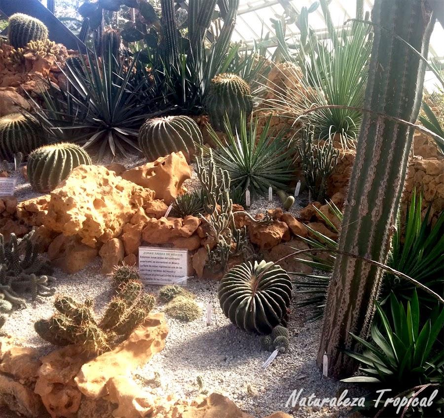 Jardín xerófilo o xerojardín en un invernadero
