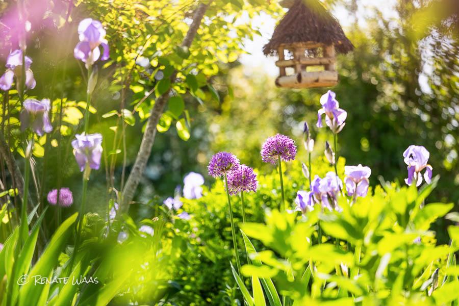 Gartenblog geniesser garten die sch nsten pflanzenkombinationen - Geniesser garten ...